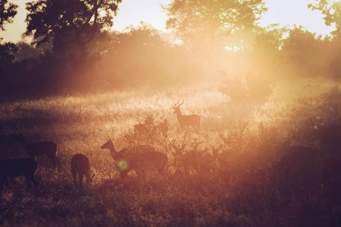 a group of deers gathering on a field with lens flare