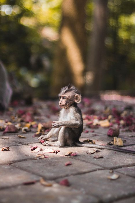 A baby monkey sitting on pavement - wildlife photography clothes