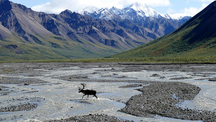 A moose running through a mountainous landscape - wildlife photography clothing