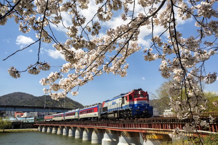 A train crossing over a bridge with blossoms in the foreground - train photography tips
