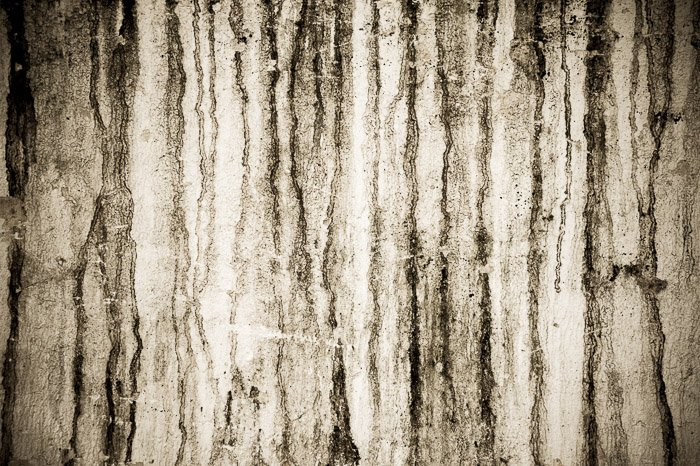 A grunge background of grainy wood - edgy photos