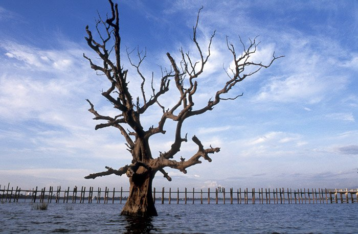 A dead tree in the middle of a lake