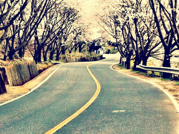 An eye level angleof a road lined with trees road.