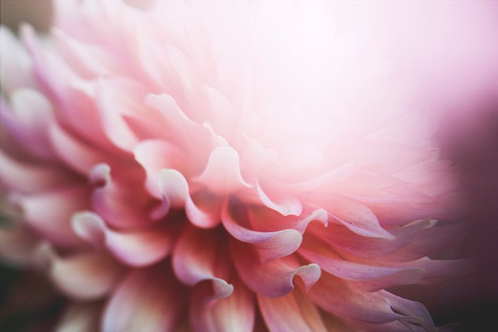 A close up photo of abstract flowers with a colorful pink blur