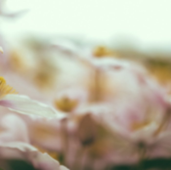 Blurry abstract flower photo