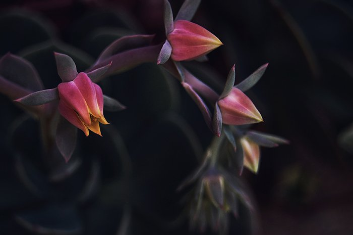Atmospheric abstract flower photo