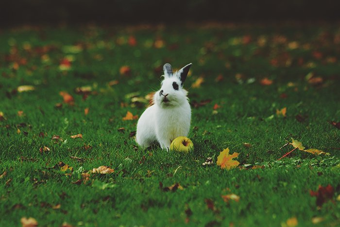 Sweet wildlife photo of a rabbit on grass - cool animal photography examples