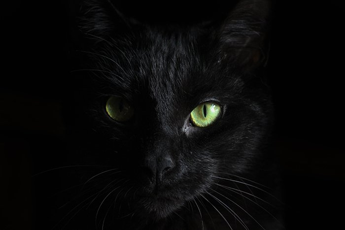 Atmospheric close up photo of a black cat with focus on its eyes - cool animal photography examples