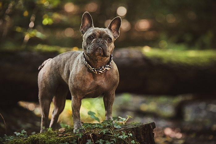 Adorable Outdoor Photo Shoot With a small brown dog