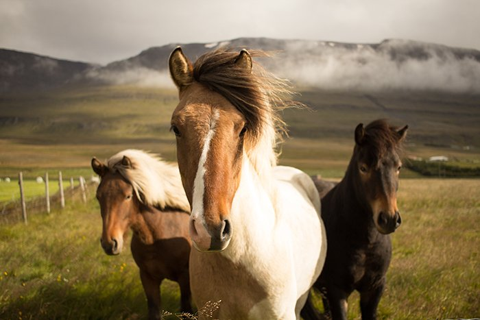 Epic photo of three wild horses - cool animal photography examples
