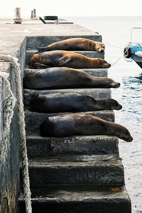 Adorable shot of seals sleeping on stone steps - cool animal photography examples
