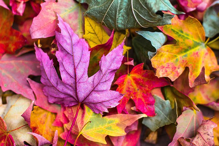 Autumn photography of colorful leaves on the ground