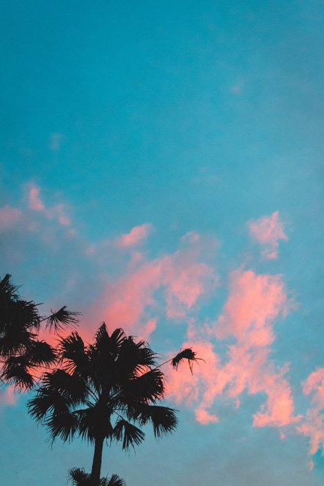 An image of two silhouettes of palm trees on a cyan and red background