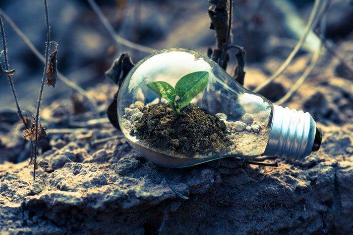 small plant inside a light bulb
