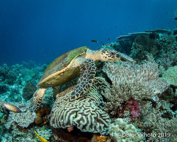 Atmospheric underwater ocean picture of a seaturtle swimming near rocks