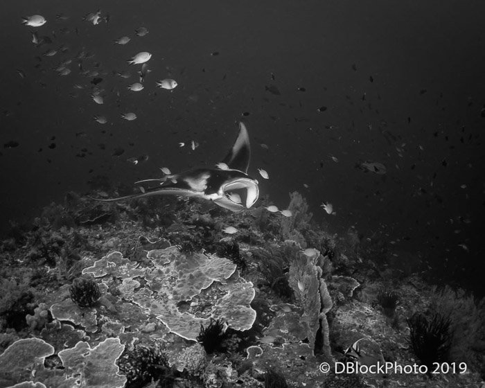 Black and white underwater ocean picture of a fish and other underwater marine life