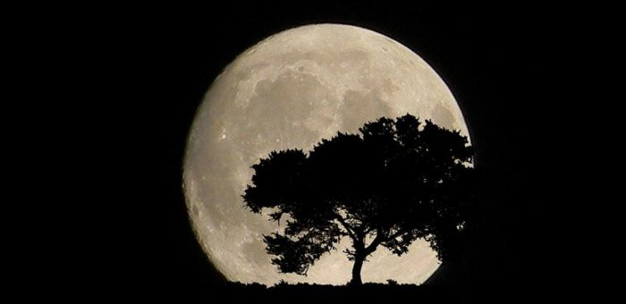 The silhouette of a tree in front of a full moon