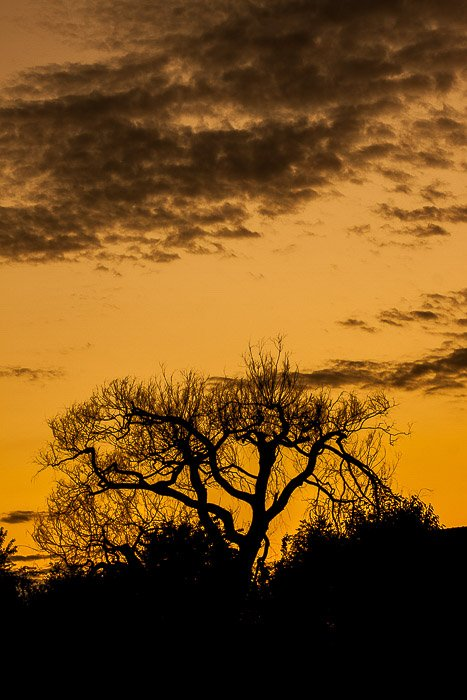 A tree in silhouette against a sunset sky