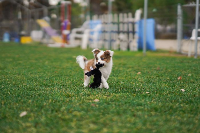Cute pet portrait of a brown and white puppy on grass - exposure settings for pet photography