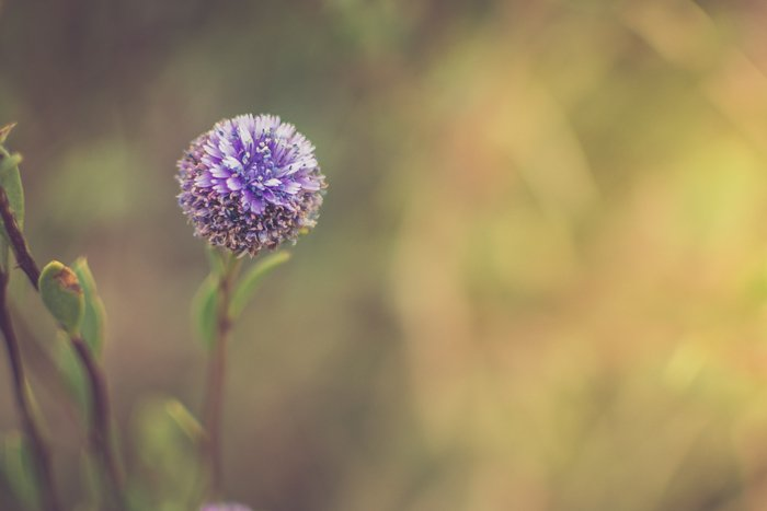 Close up of a purple flower with a blurry green background - focus point photography