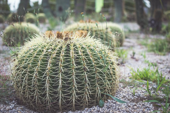 A glose up of a cactus plant outdoors in a garden