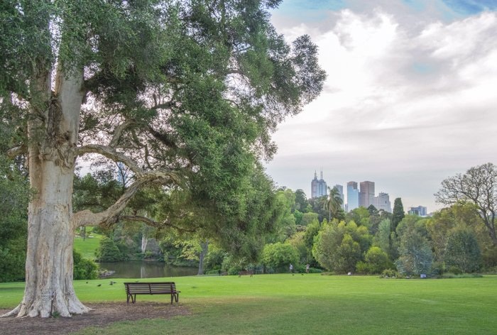 Serene view of a park bench by a tree in a public park