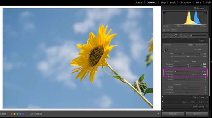 A screenshot of how to edit garden photography in Lightroom