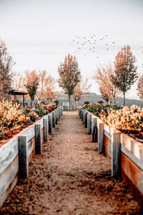 An autumn leave lined path in a garden