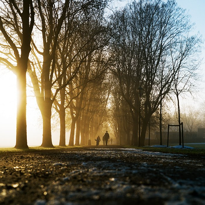Stunning shot of the silhouettes of people walking through trees in evening - best quality of light for the day