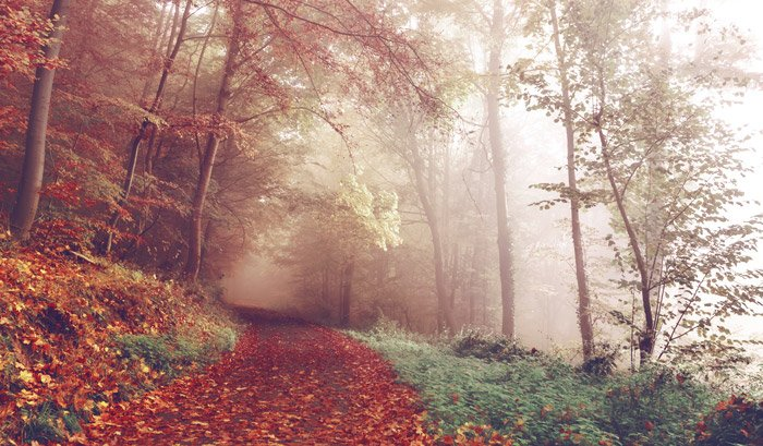 An autumnal scene dominated by red tones using color theory in landscape photography