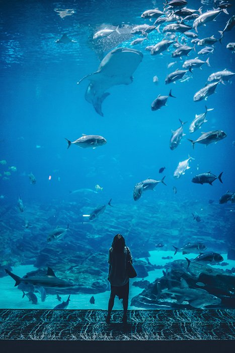 Atmospheric portrait of a person looking at fish in an aquarium