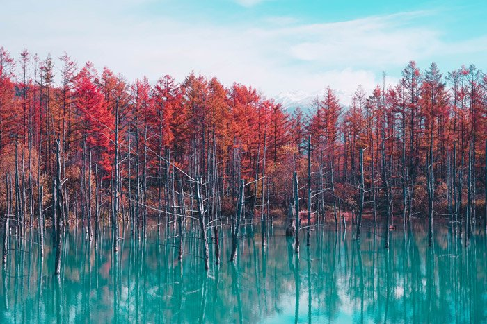 a beautiful landscape of bright colored trees over a lake - stunning landscape photos