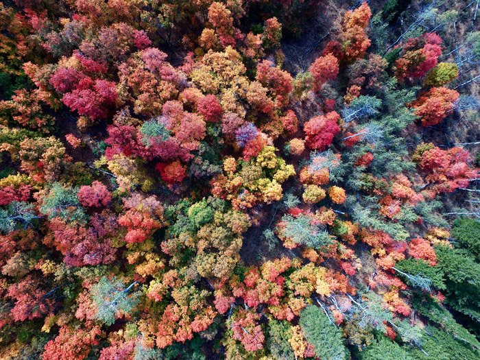 An aerial photo of trees in a forest - photography themes