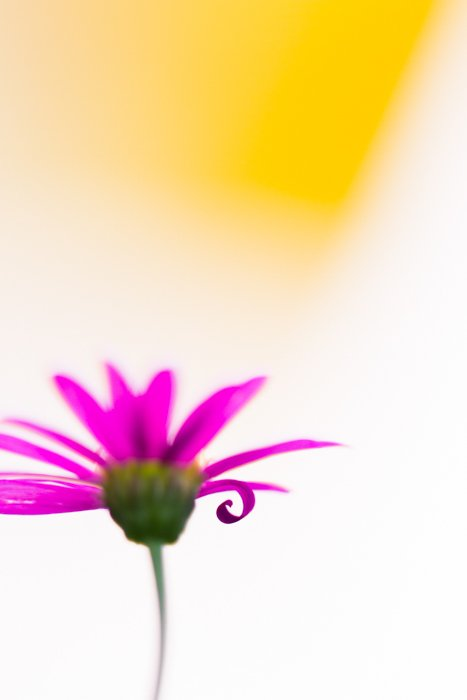 Stunning macro image of a pink flower with blurry yellow background