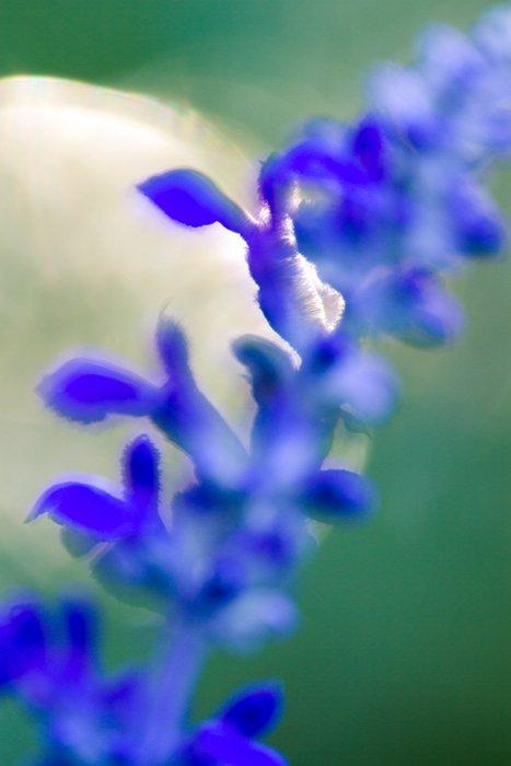Stunning macro image of a blue flower