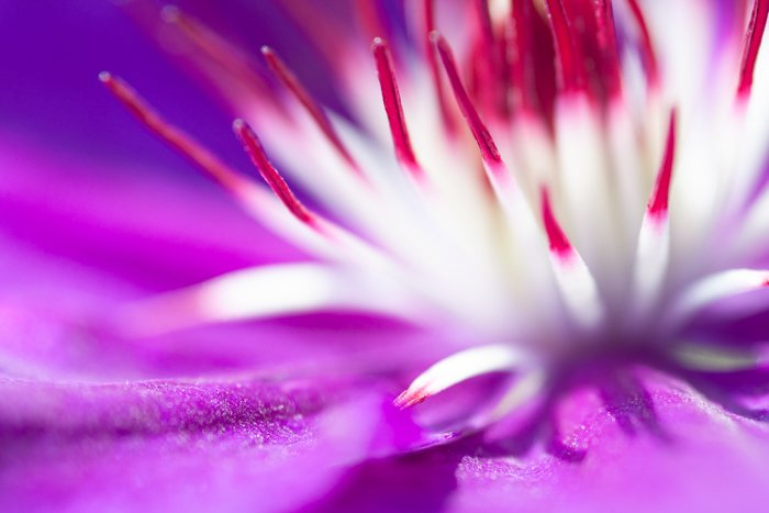 Stunning macro image of a purple and white flower