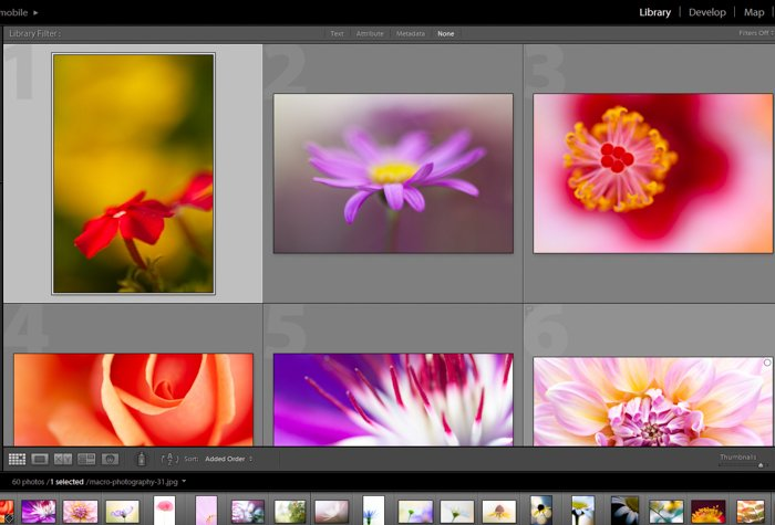 a screenshot showing how to post process macro photography in lightroom