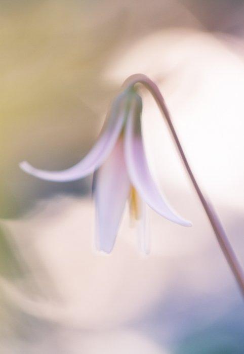 Stunning macro image of a white flower