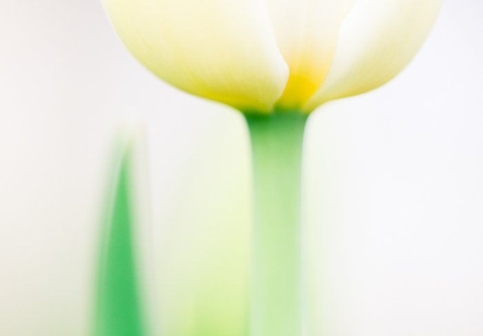 Stunning macro image of a yellow flower