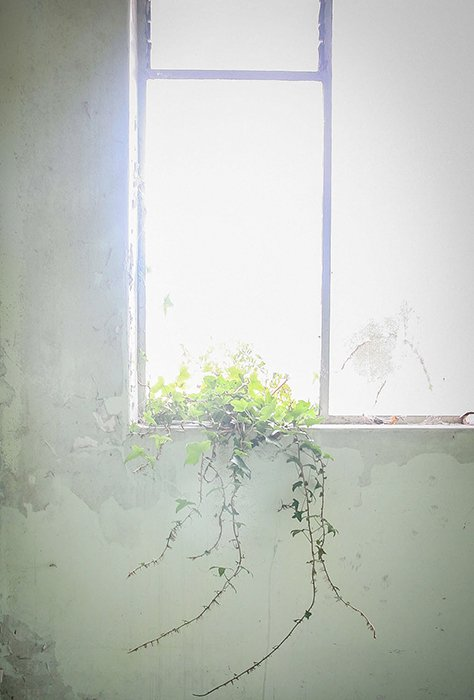 a plant on a window sill with bright sunlight shining through - tone photography tips