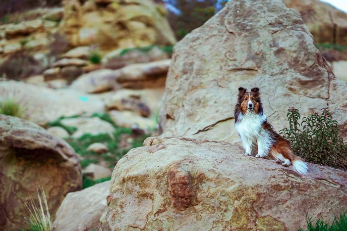 a brown and white dog sitting on a rock - pet photography aperture