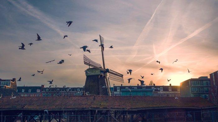 Birds flying above the rooftops in De Gooyer, Amsterdam pictures
