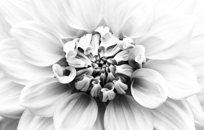 Atmospheric black and white macro photography of a flower