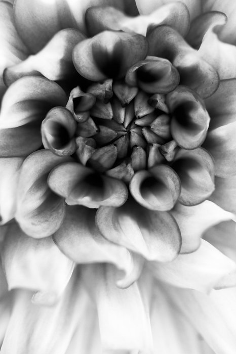 Artistic black and white macro photography of a flower