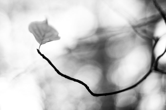 black and white macro photography of a flower