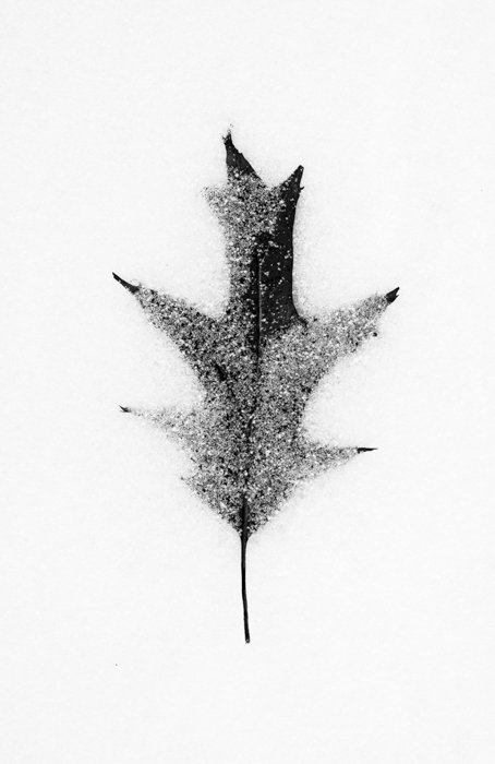 black and white macro photography of a leaf in the snow