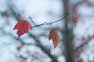 beautiful leaf photograpy