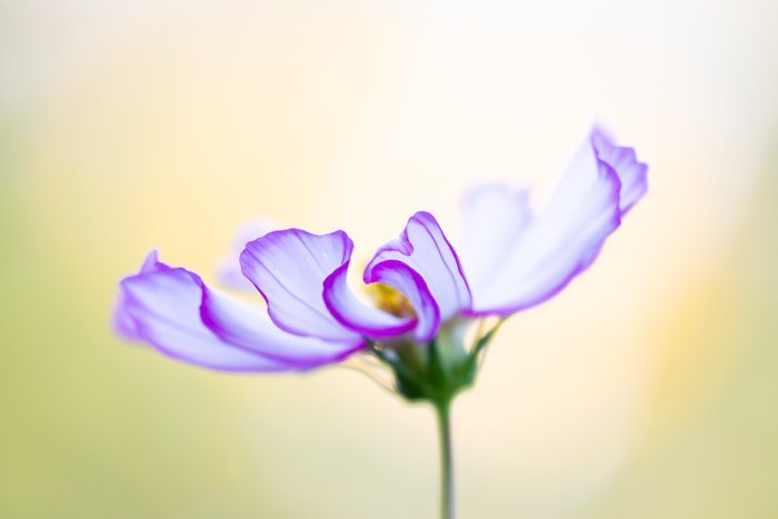 Blurry macro shot of a flower with blurry background