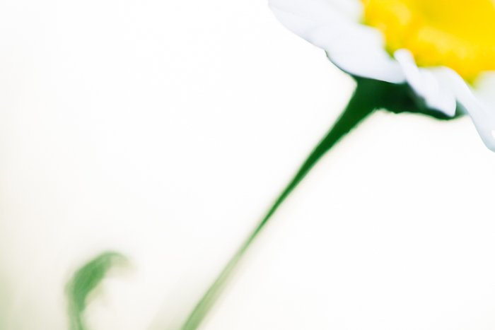Blurry macro shot of a flower with white background