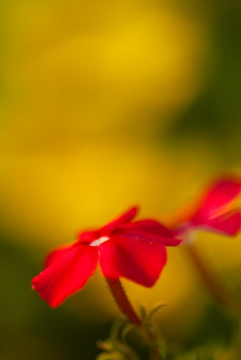Blurry macro shot of a red flower with blurry background